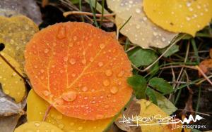 Fall Color Rain