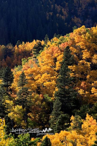 The Different Colors Of Fall