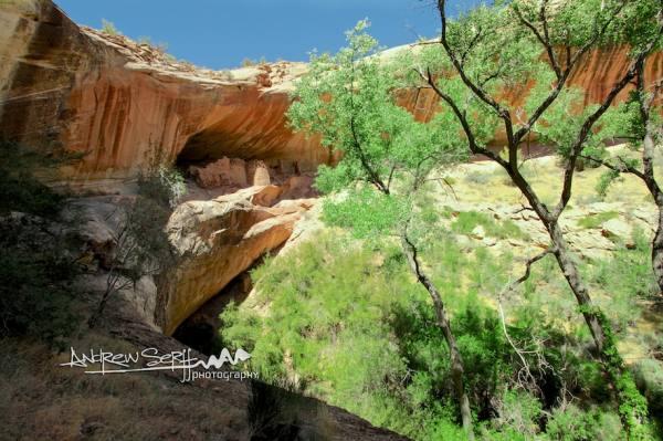Monarch Cave Dwelling